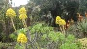 Pflanzenfülle