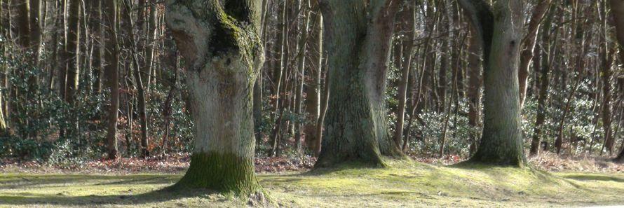 """Live-Kurs """"Baumgruppen"""" März 2016 Ahrenshoop"""